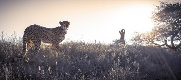 Cheetah Conservation Fund – Image 10 / 13 © Thomas Kettner, Hamburg, http://thomaskettner.com