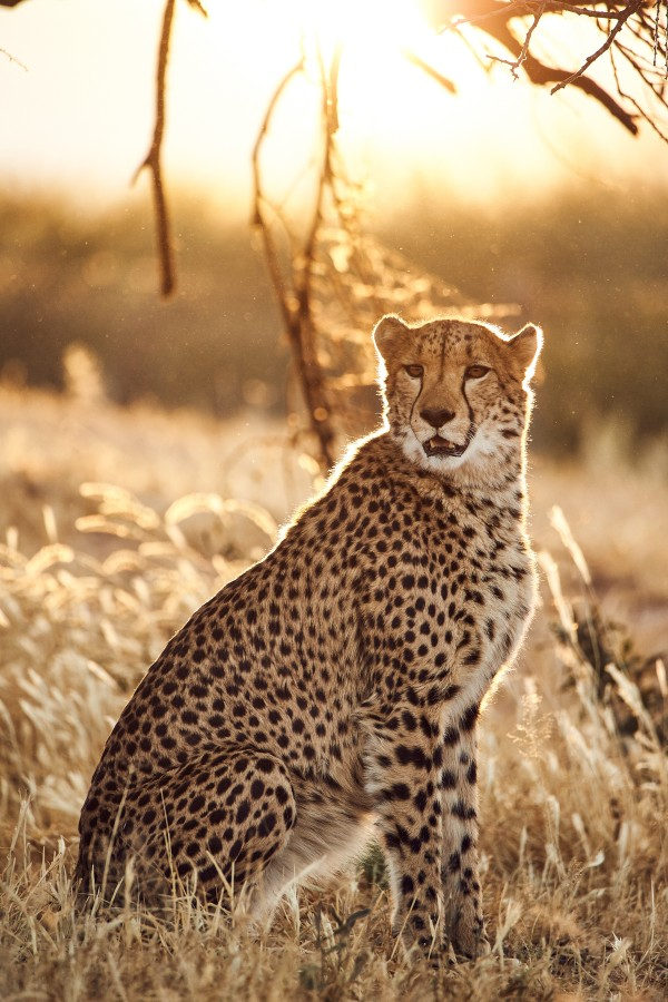 Cheetah Conservation Fund, © Thomas Kettner, Hamburg, http://thomaskettner.com